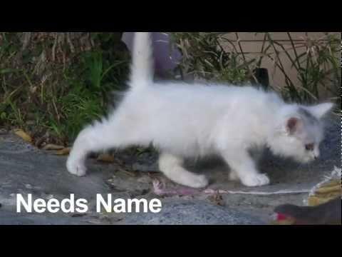 Kitten Catchers - Kitten Names  Vlog 7