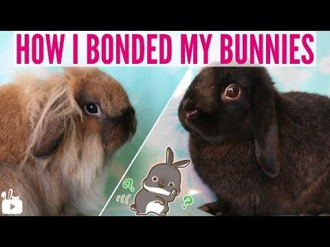 How I bonded my 2 female rabbits! 🐰
