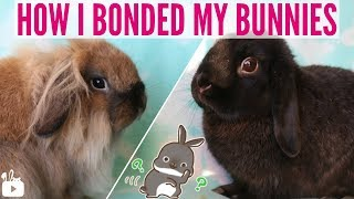 how to bond rabbits