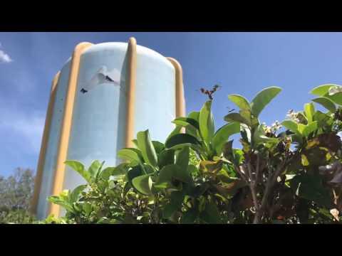 Digital Short: Save the Seminole Water Tower