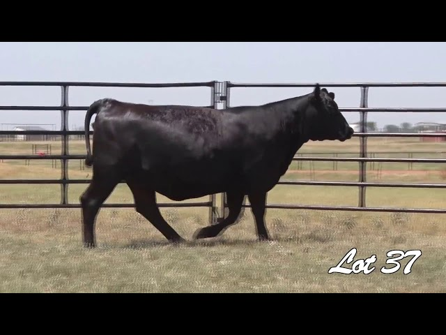 Pollard Farms Lot 37