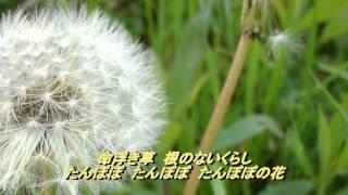 たんぽぽの花/都はるみ (2012年5月23日発売) この曲とても歌いたく、無...