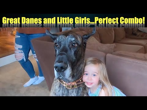 great-danes-and-little-girls...a-winning-combination!