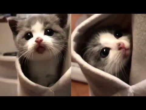 Funny Cats 😻 Cute and Baby Cats Videos Compilation #10