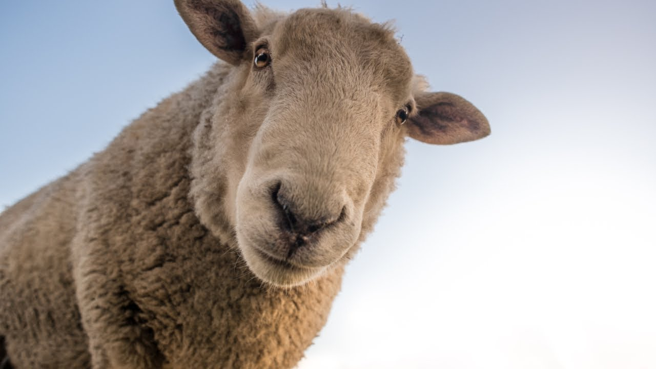 7 INTERESTING FACTS ABOUT WOOL