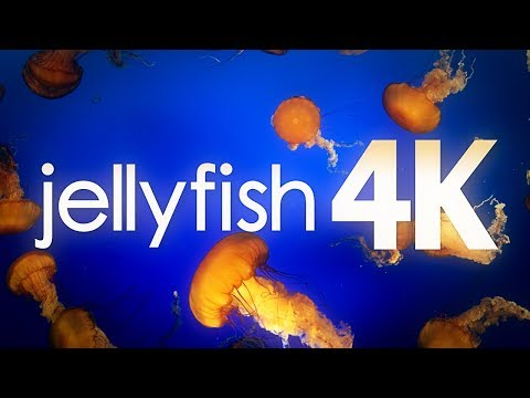 Vancouver Jellyfish Aquarium in 4K