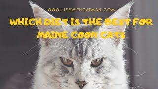 Which diet is the best for Maine Coon cats?