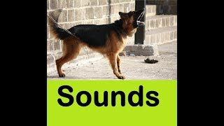 Dog Barking Sound Effects All Sounds
