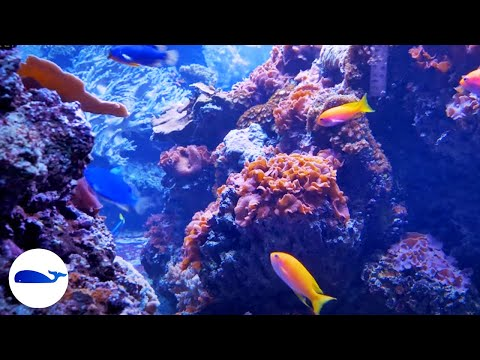 4K CORAL REEF AQUARIUM NO MUSIC 8 HOURS | RELAXING SLEEP SCREENSAVER