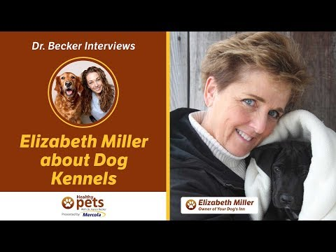 Dr. Becker Interviews Elizabeth Miller Holistic Dog Boarding