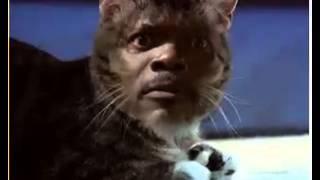 samuel l jackson cat