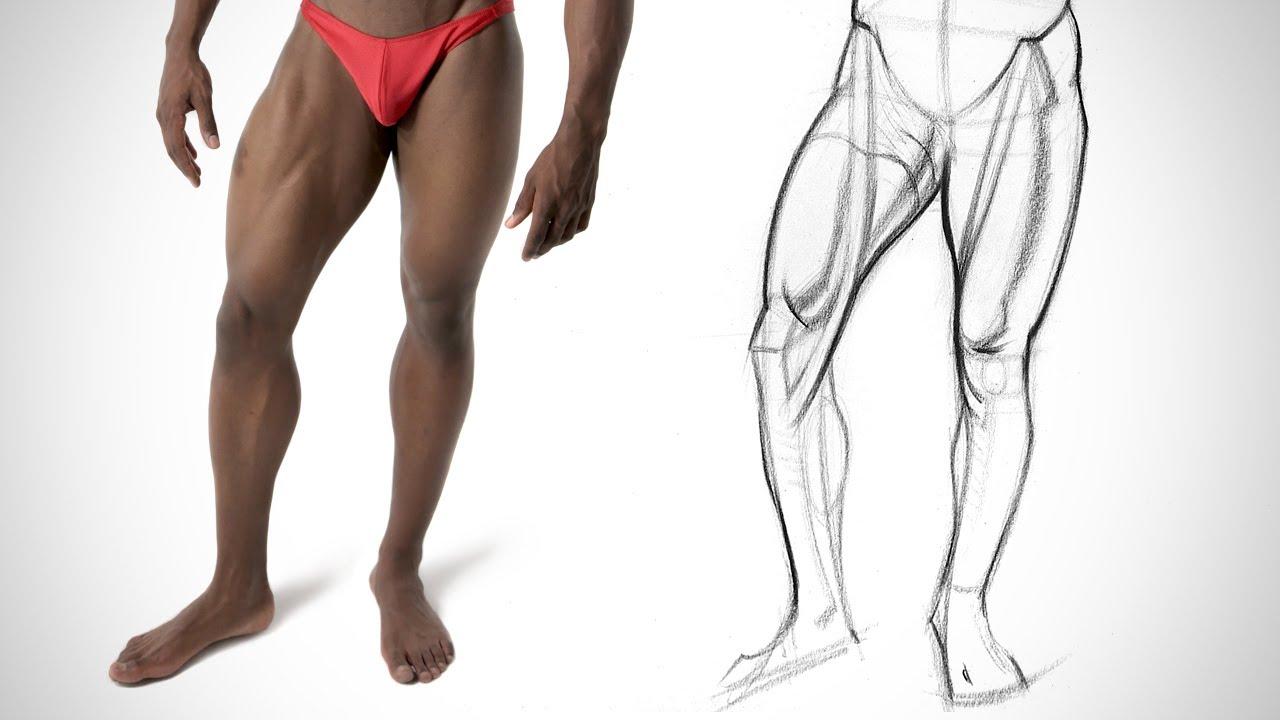 Leg Quicksketch Inner Leg Anatomy Youtube