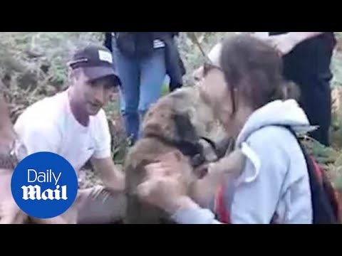 Tearful owner reunited with dog who survived THREE DAYS in woods