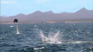 Manta rays desperately trying to escape the ocean