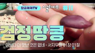 시골라이프 11화:검정땅콩 먹방 중독 첫째딸