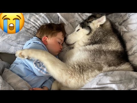 husky-refuses-to-get-out-of-babies-bed-then-falls-asleep-cuddling-him!!-[cutest-video-ever!]