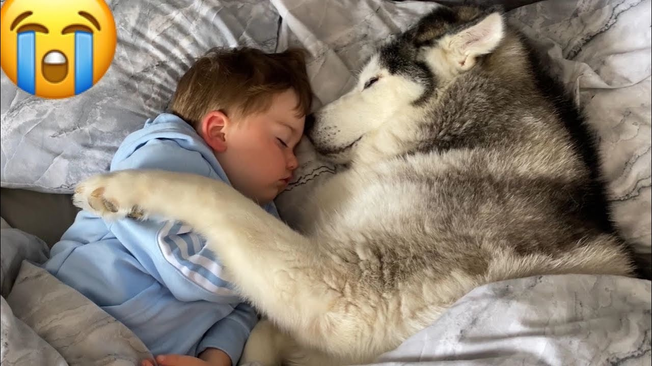 Malamute Refuses To Get Out Of Baby S Bed So She Can Cuddle Him To Sleep Inspiremore Our names are phil, niko, teddy & milo plus little amelia! malamute refuses to get out of baby s