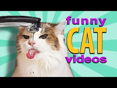 Funny Cat Videos – Cat Drinking From Tap, Dog Breaks Window For Cat, Cat Reaching Under Door