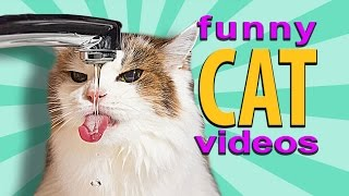 Funny Cat Videos - Cat Drinking From Tap, Dog Breaks Window For Cat, Cat Reaching Under Door