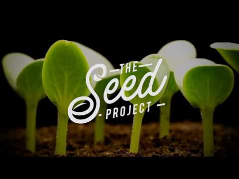 The Seed Project - A Ministry of Ignite Europe
