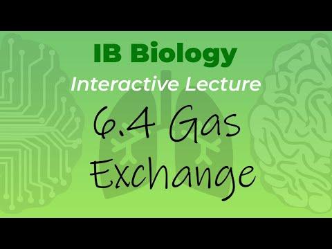 Mr. Leonard's IB Biology Course - 6.4 Gas Exchange