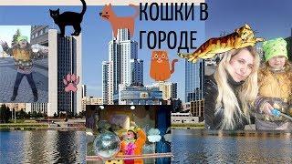 Кошки в городе/Влог идем на спектакль/Владимир Куклачев и его кошки