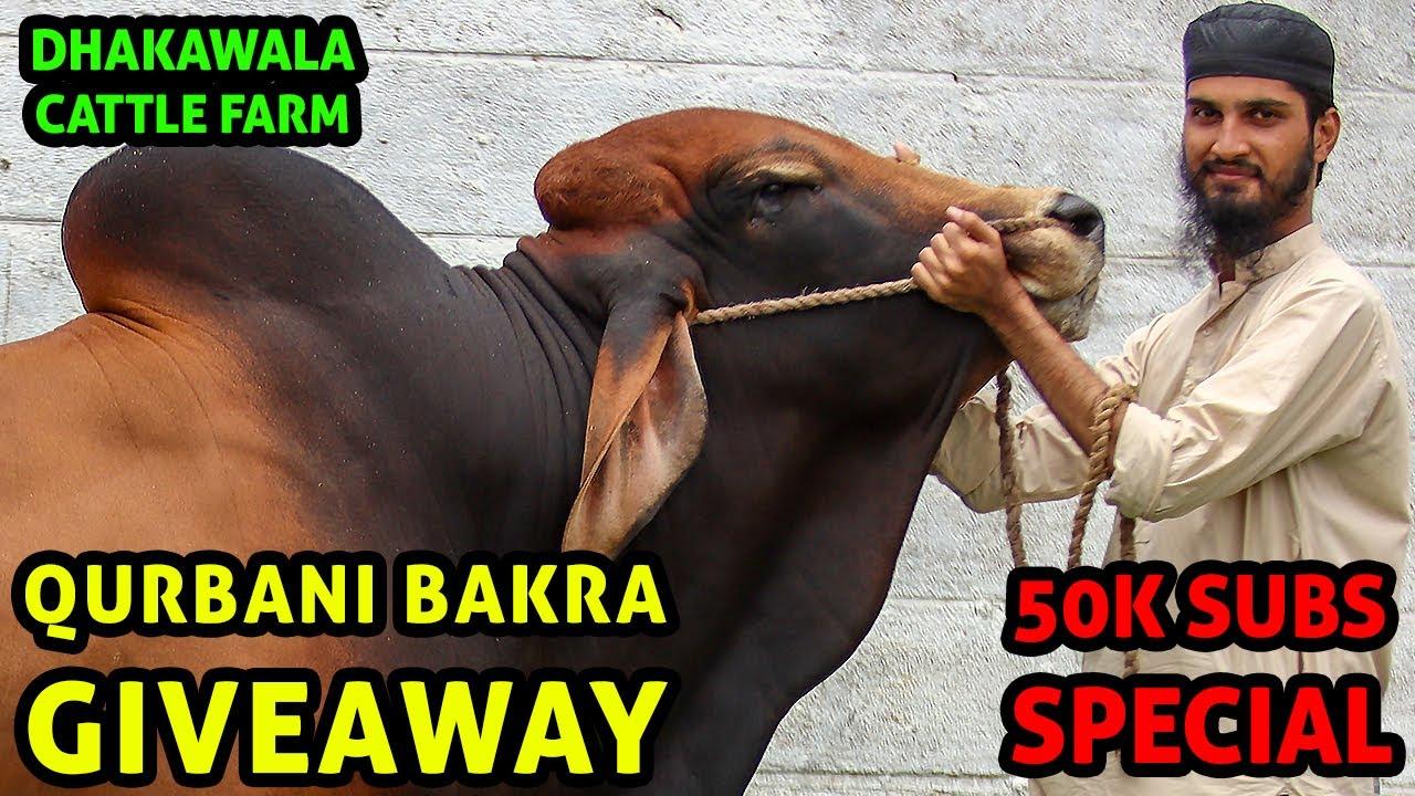Qurbani Bakra GIVEAWAY at Dhakawala Cattle Farm 2020 by Cattle Market Karachi | Bakra Eid 2020