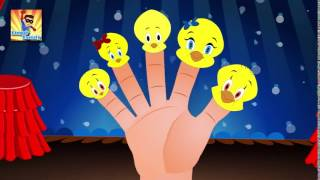 Finger Family Tweety Bird Finger Family   Finger Family Songs   Finger Family Parody