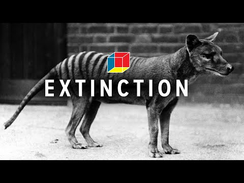 The Search for the Extinct Tasmanian Tiger (or: What to do if you encounter an extinct animal)