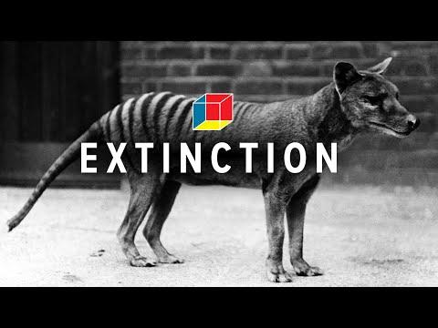 Is the Tasmanian tiger not extinct?