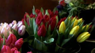 Fleurs : offrez un bouquet de pesticides ! - Tout compte fait