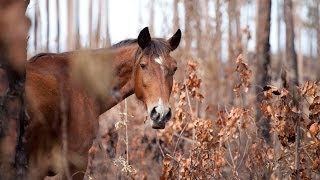 The Eleventh Hour: help us save Abaco's wild horses