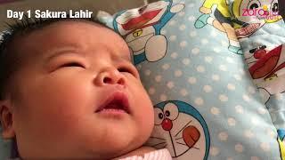Hari 1&2 Kelahiran Adik Bayi Zara Cute   Bayi Lucu Gemuk Gemes   Sakura Chan