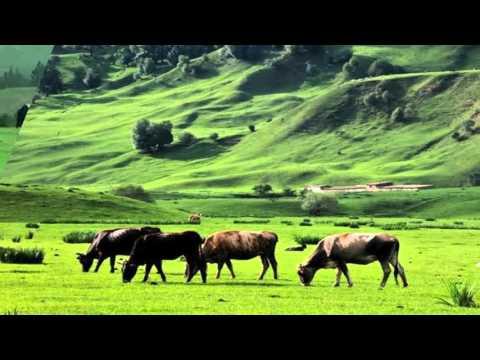 Bayanbulak Grassland - China (HD1080p)