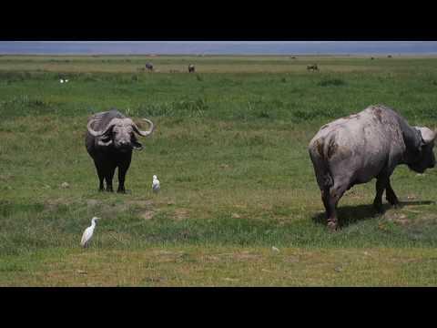 PC298926   Buffels Amboseli NP