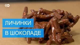 Блюда из насекомых   новинки кулинарного искусства
