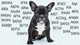 Клички, имена для собак девочек  Как назвать собаку