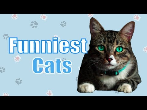 Funniest Cat Vines 🐱 Best Cute Animal Videos Compilation