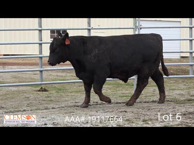 Clemson Extension Bull Test Lot 6