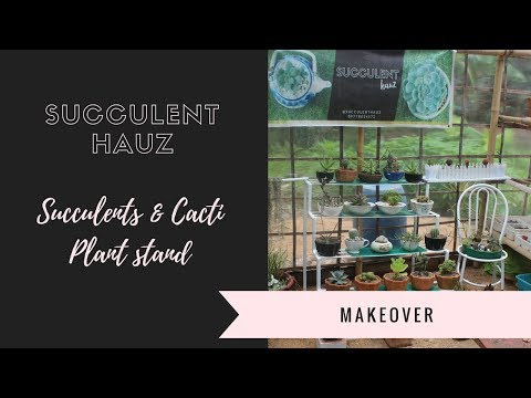 My Succulents and Cacti Plant Stand Makeover (Philippines)