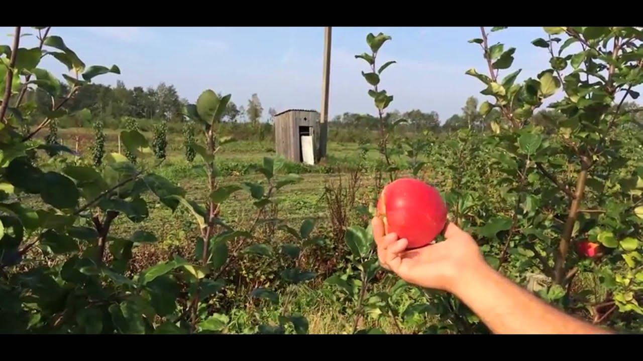 Саженцы яблони цена: 300 руб / шт. Саженцы яблоня имант цена: от 90. 00 руб / шт. Саженцы яблоня чемпион (сhampion) цена: от 90. 00 руб / шт.