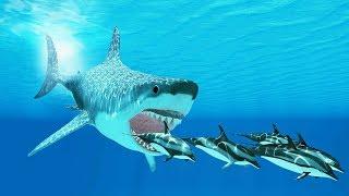 Podwodny Wszechświat - Drapieżcy z Głębin