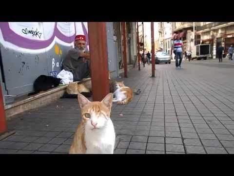 The 'Cat-Man' of Istiklal street in Istanbul.