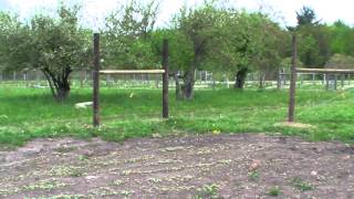 Orchard Diary 5/19/2013: Fencing project intro