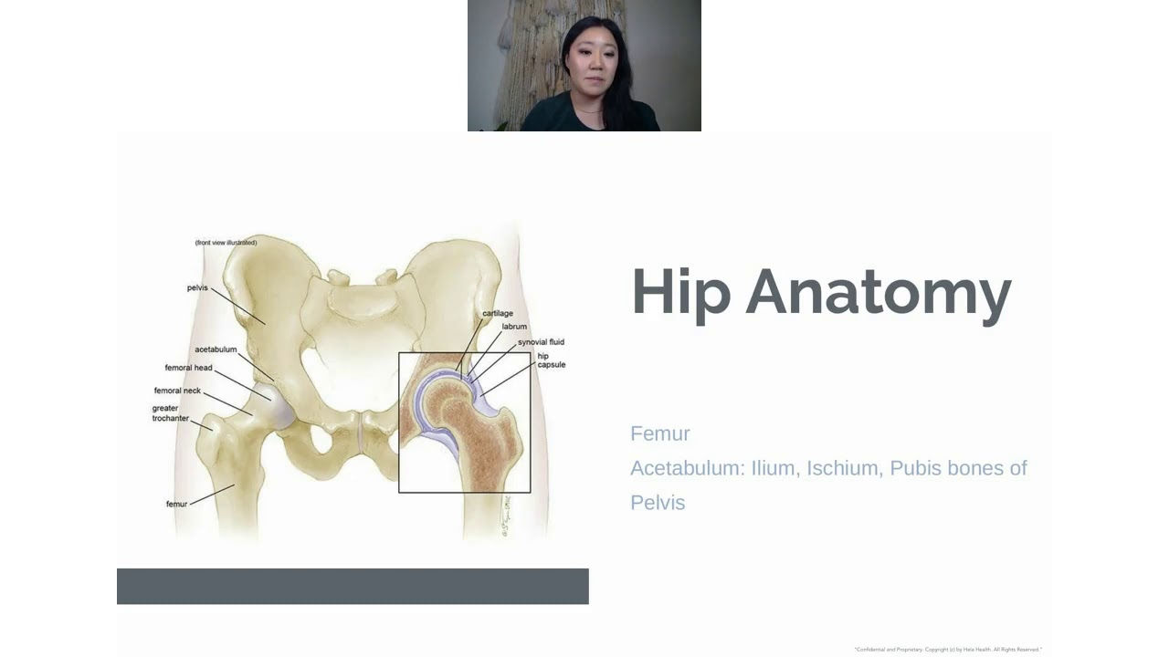 Hip and Pelvic Floor