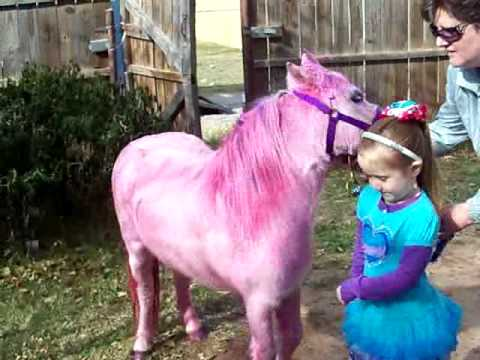 Pink Pony Surprise For Rosie Dale S 5th Happy Birthday