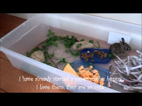Big Dog Rescues Tiny Baby Bunnies