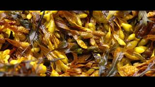 Lush Cosmetics | Meet Our Seaweed Supplier: Part 3