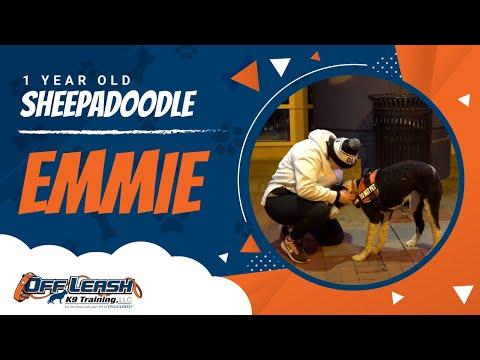 fear-reactive,-emmie- -unleash-the-fury- -fear-reactive-dog-training