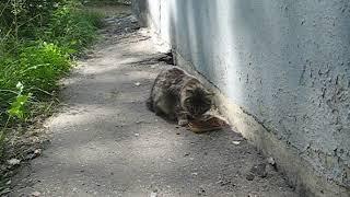 КОТИК КУШАЕТ (CAT IS EATING)